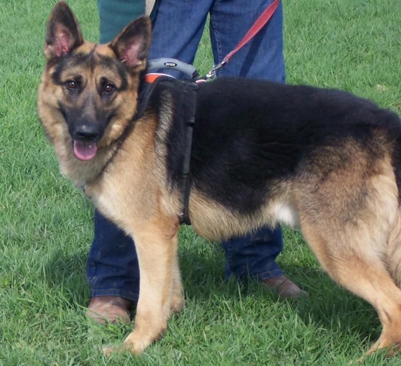 Adopt Trucker On Cute Dogs Dogs Malinois Dog
