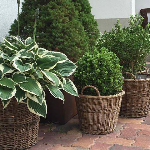 Obrazki Z Podrozy Plants Garden Basket