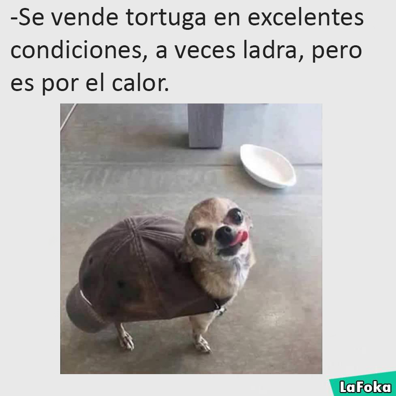 Humor Latino Funny Animal Pictures Funny Animals Cute Funny Animals