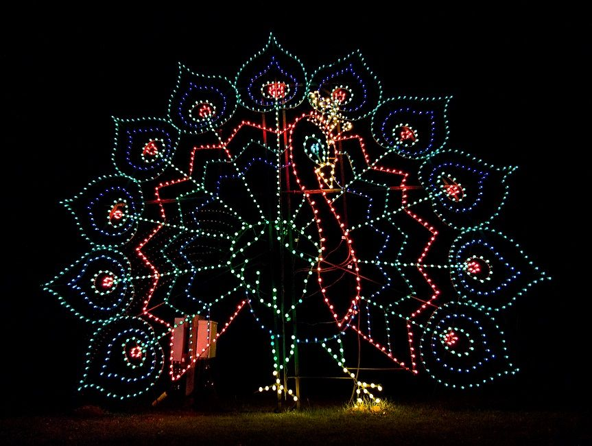 James Island Lights Impressive An Electric Peacock Struts His Stuff At The Holiday Festival Of Inspiration