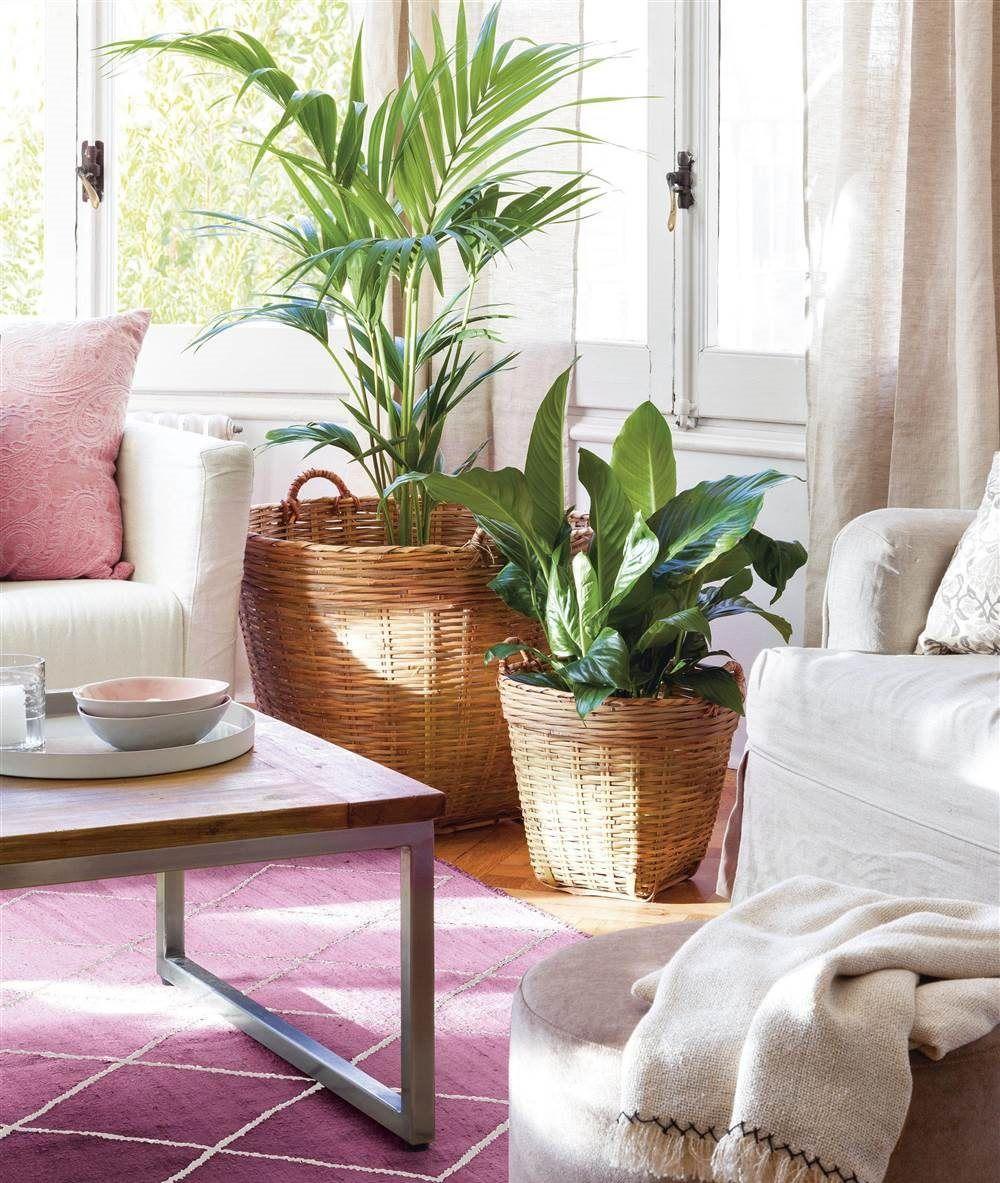 Plantas de interior en sal n nos gusta el rosa - Plantas para salon ...