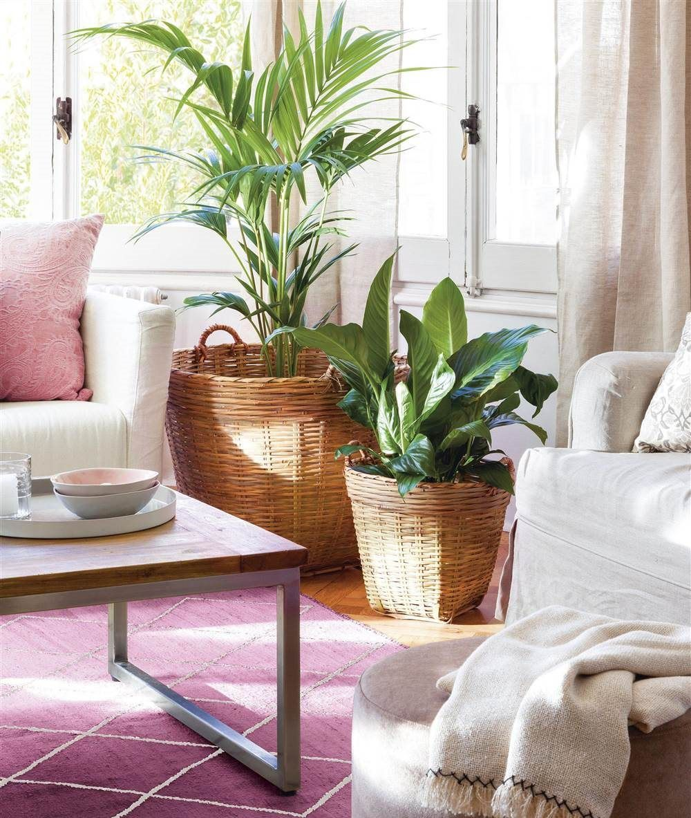 Vuelve A Enamorarte De Tu Salon Deco Ecologico Oth Plant Decor