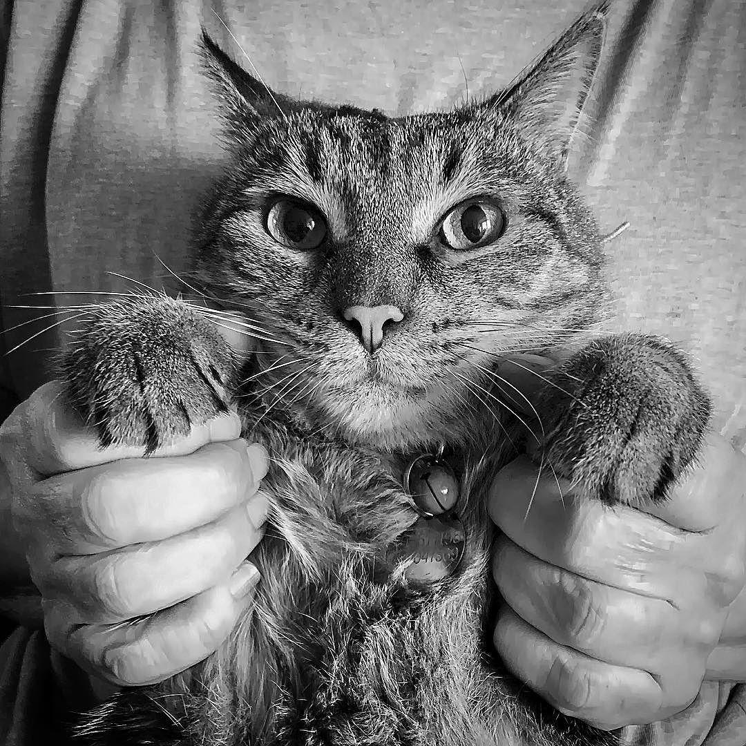 #instagram #cat #gato #ufo #ovni #nature #instafollow #love #picoftheday #repost #likeforlike #like4like #life #amazing #nature #spain #españa by lanovenapuerta http://www.australiaunwrapped.com/