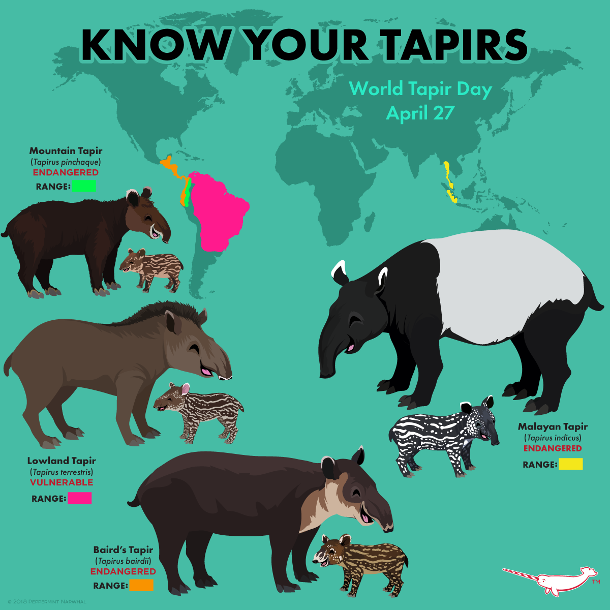Know Your Tapirs Zoo animal art, Zoo animals