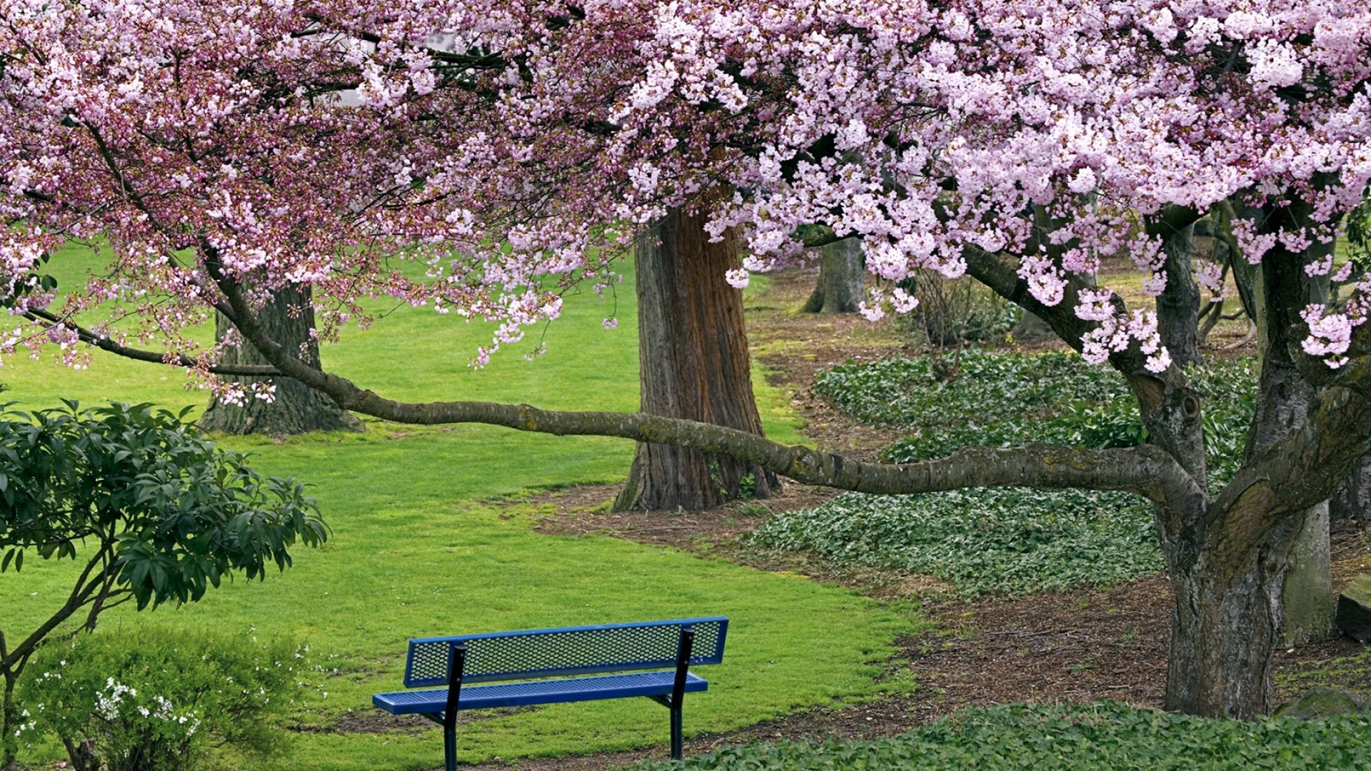 Download Wallpaper 1920x1080 Bench, Tree, Spring, Grass