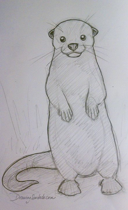 Drawing Saudade: Doodle 016 - Otter cuteness | Coloring ...