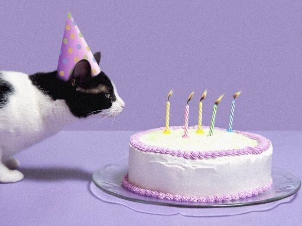 108 Cats Celebrating Their Own Birthdays | Cat birthday, Birthday ...