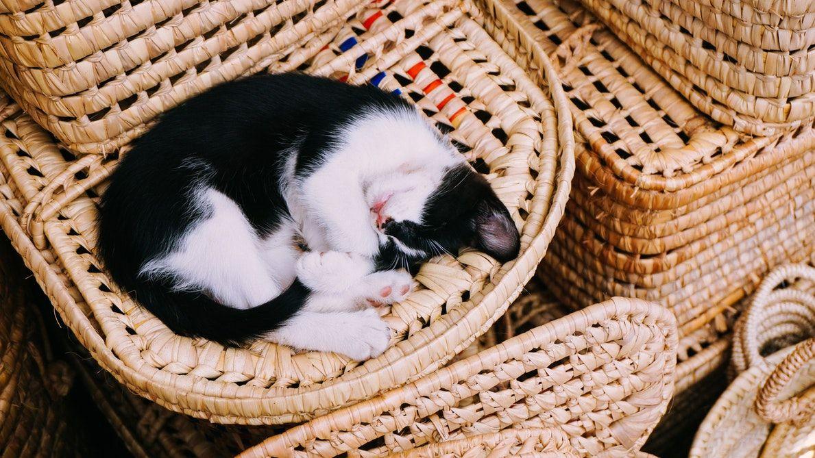 This Cat sleeping Tension freehttps//i.redd.it