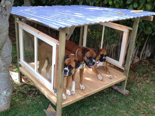 Shade Or Shelter For Outdoor Dog Run Made With Salvaged Wood