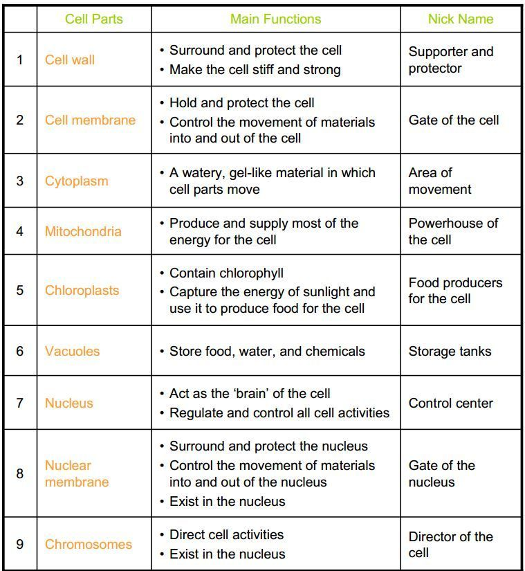 Cells And Organelles Worksheet Cell Organelles Coloring Worksheet Cell Parts Cell Parts Prin