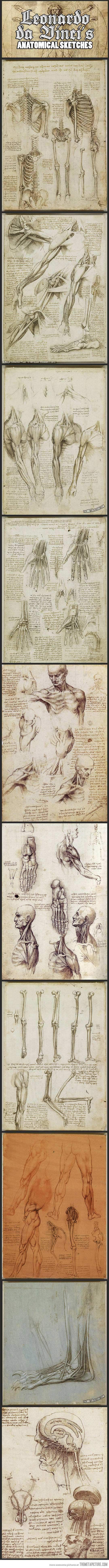 Leonardo da Vinci\'s anatomical sketches… | Zeichnen, Anatomie und ...