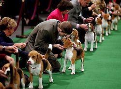 beagles, beagles, beagles