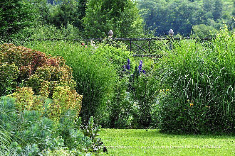 miscathus sinensis au jardin contemporain | Garden | Jardin ...