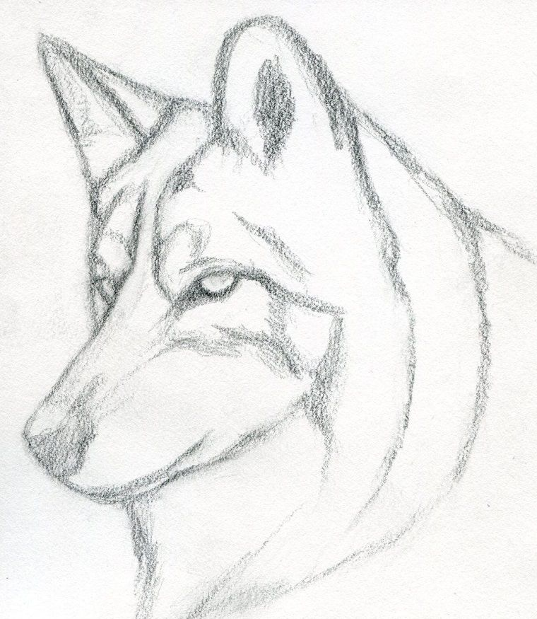 Impara A Disegnare Disegno Di Un Lupo Oscurare Con La Matita Disegni A Matita Facili Schizzo Di Lupo Disegni Di Cane