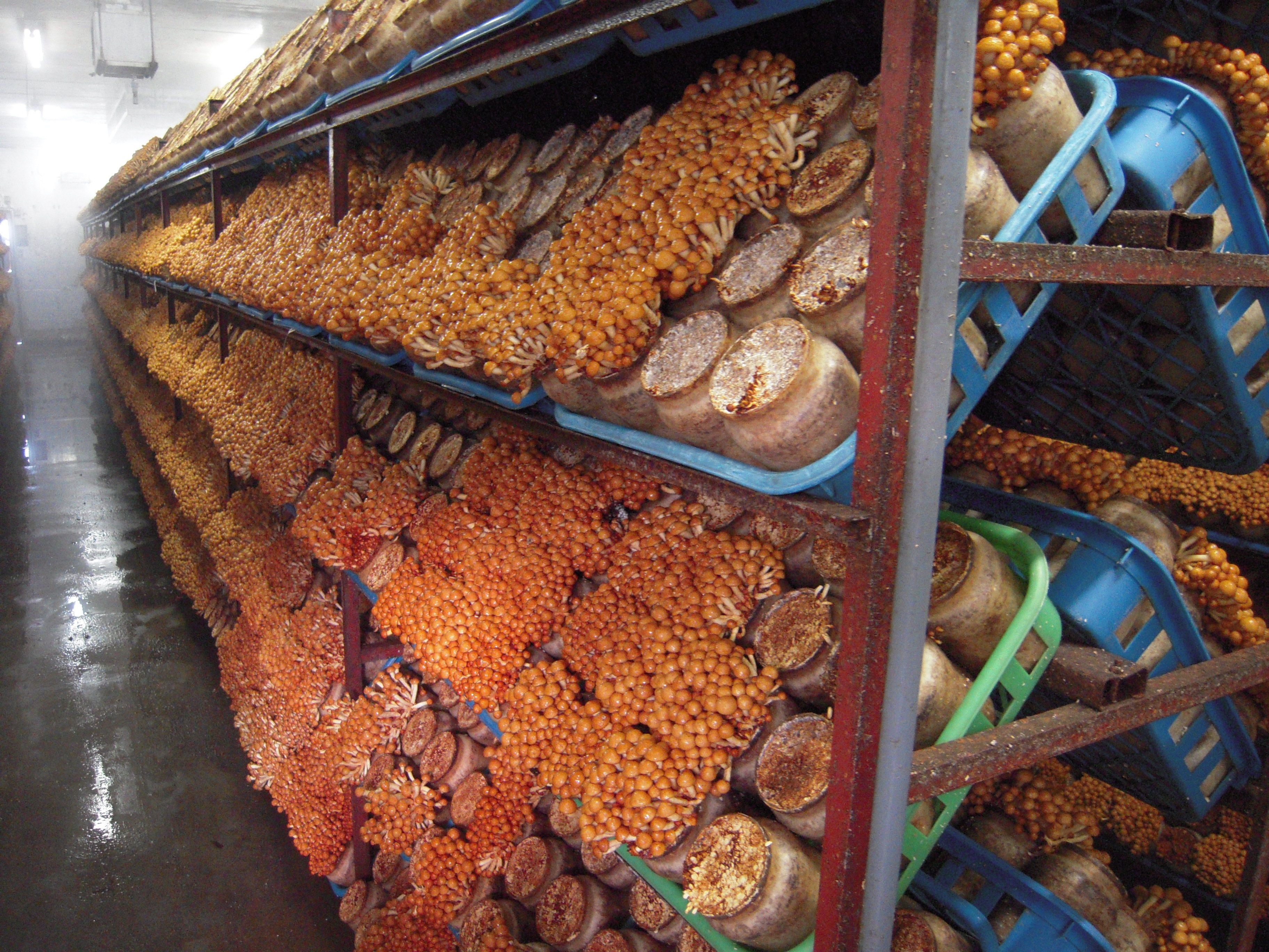 investment required for mushroom farming