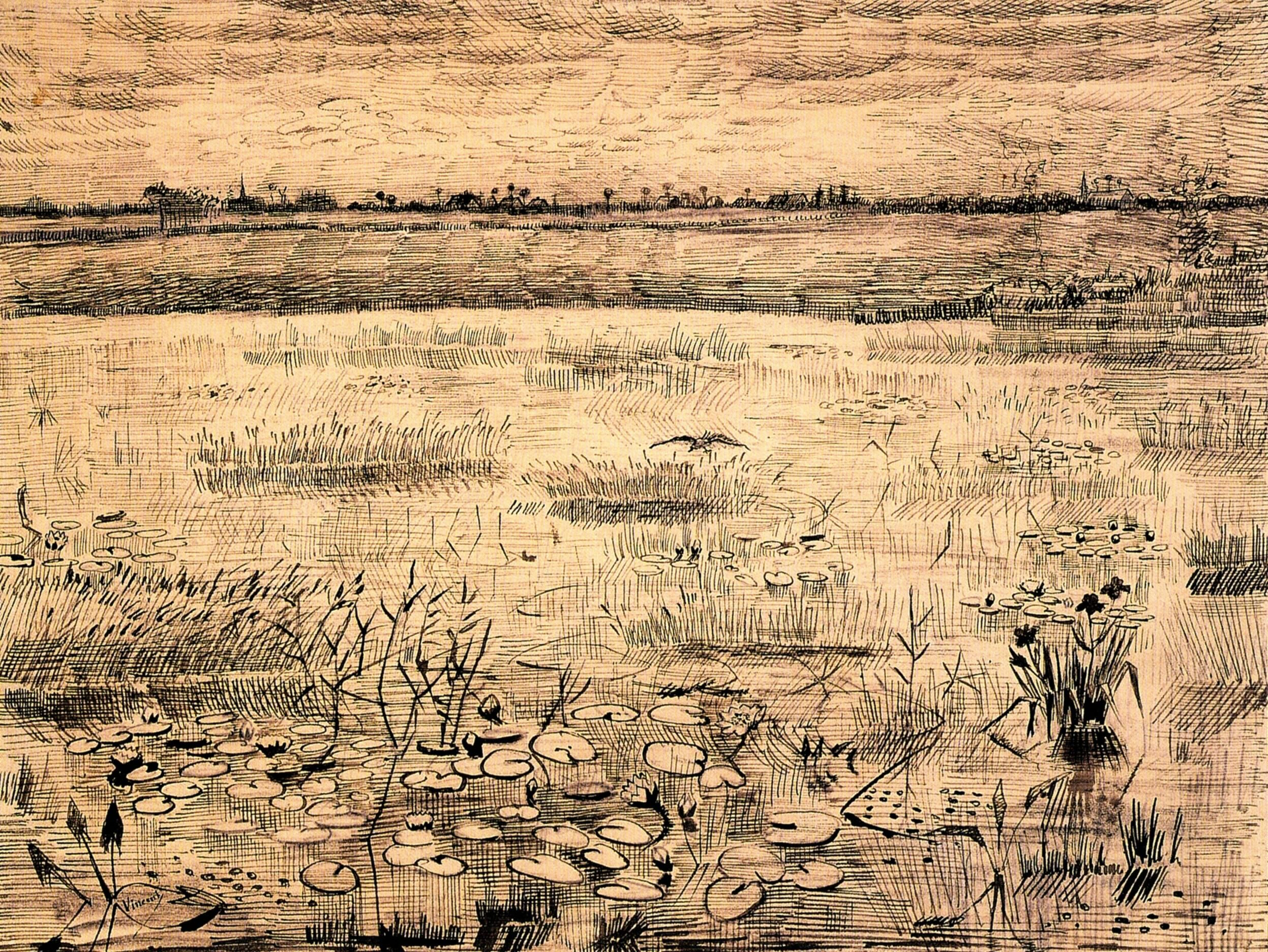 Marsh with Water Lillies Vincent van Gogh
