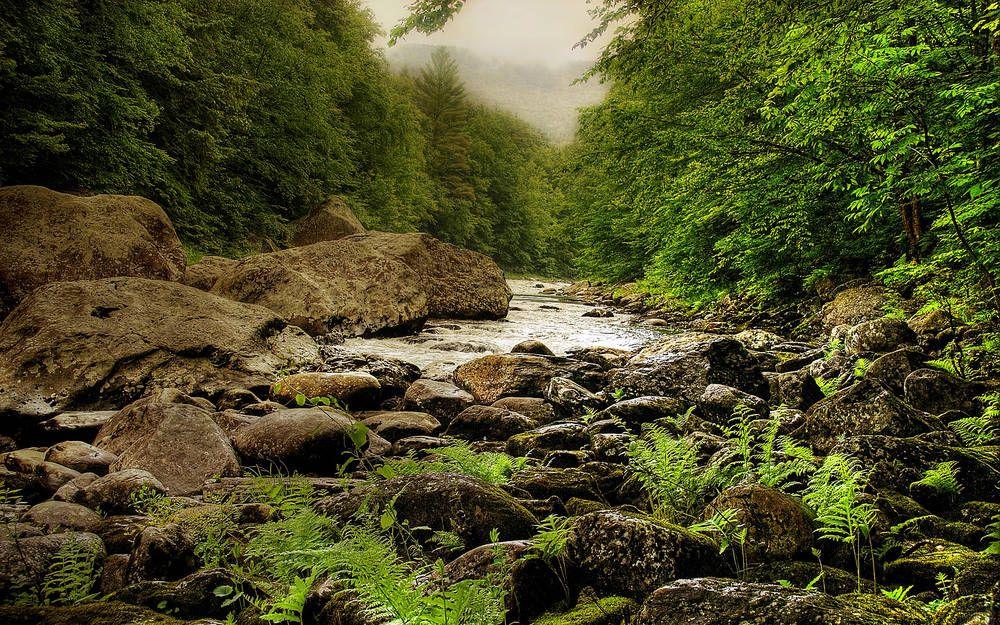 Córrego da floresta.
