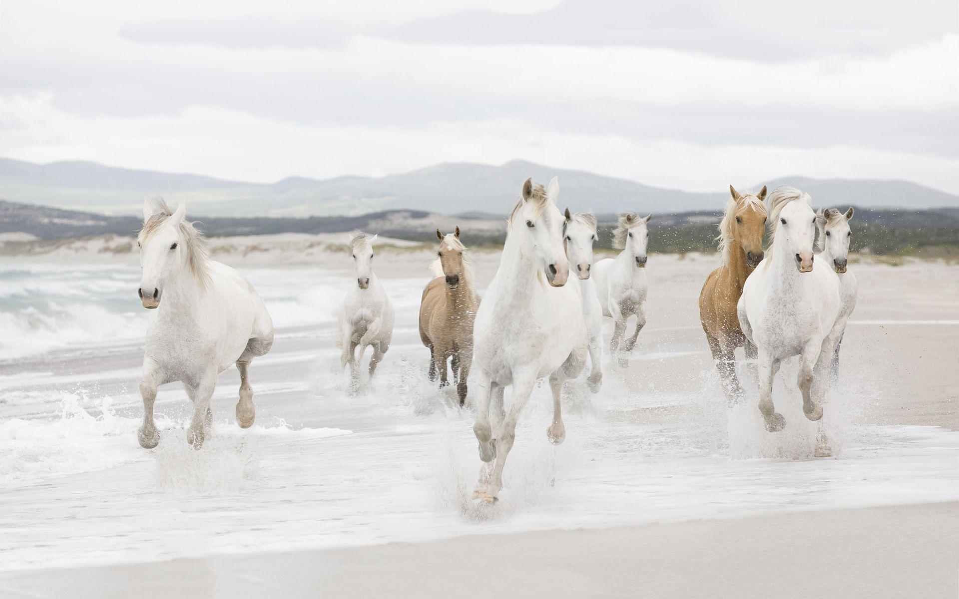 Wild horses running through water at a beach horses pinterest wild horses running through water at a beach sciox Images