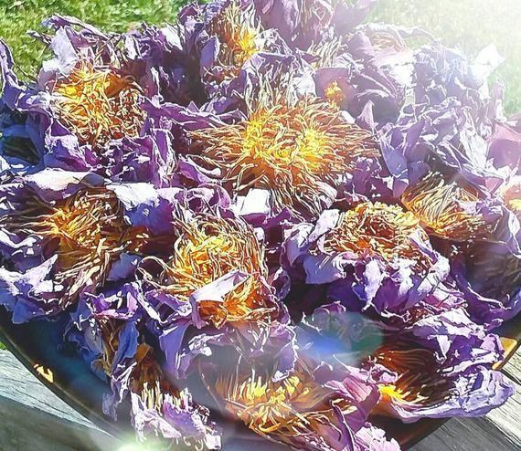 Organic Dried Globe Amaranth Gomphrena globosa Flowers Apothecary Wicca Herb