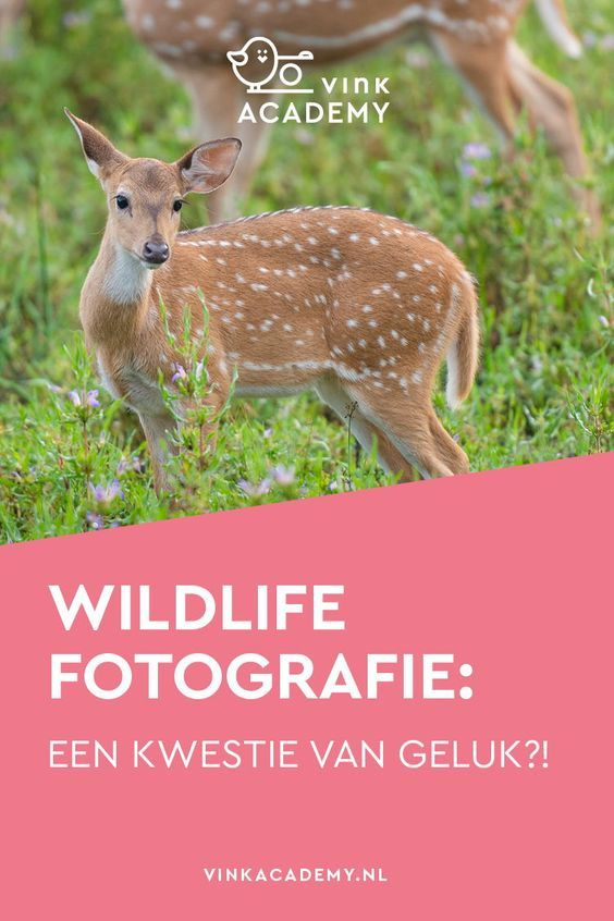 Photo of Wildlife fotografie: een kwestie van geluk? • Vink Academy