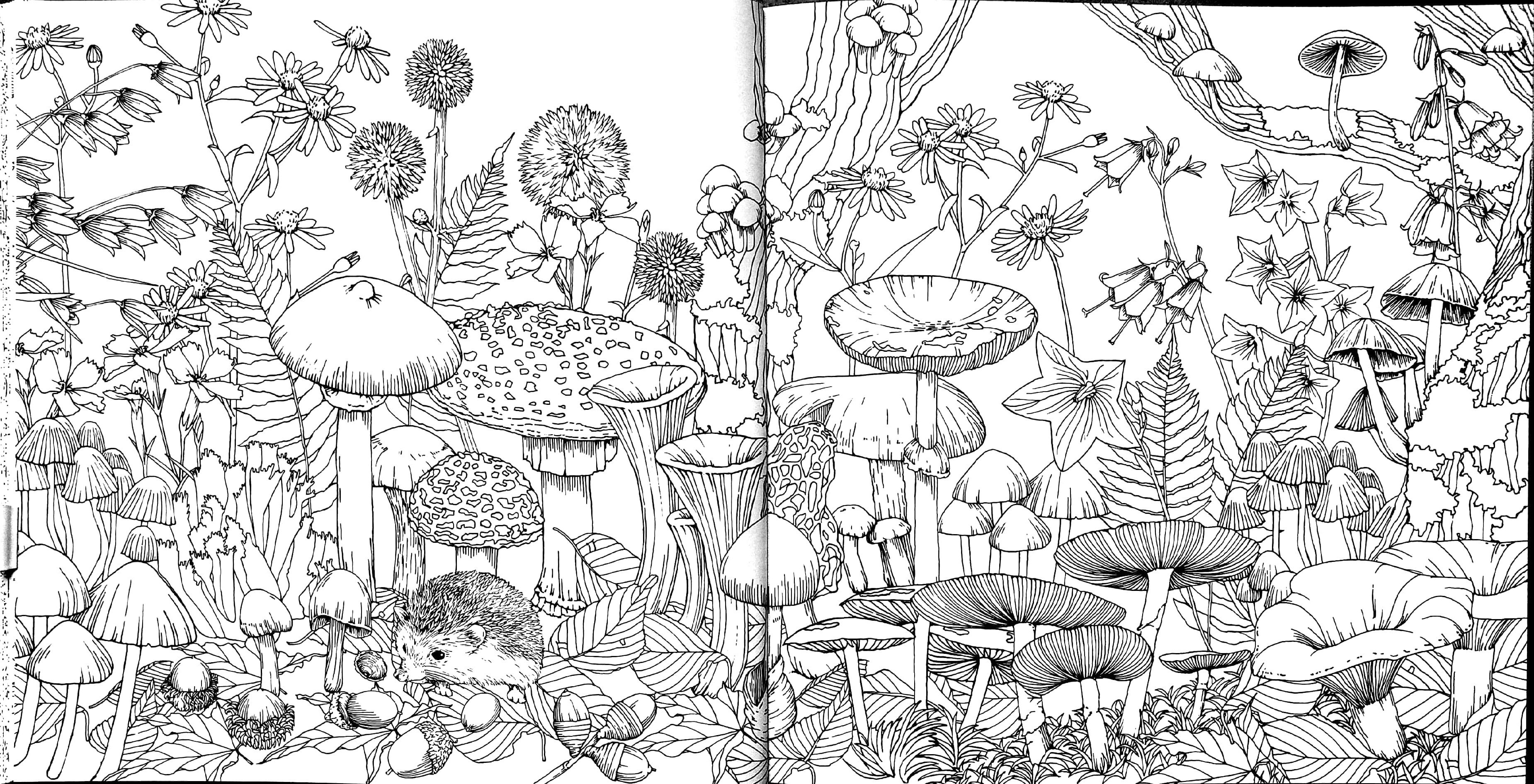 kanoko egusa Fairy coloring, Blank coloring pages