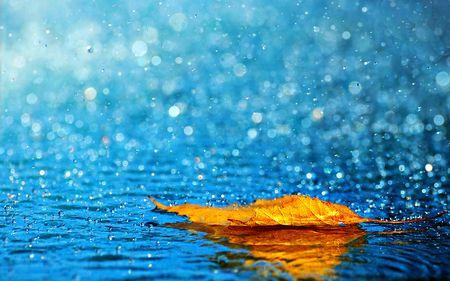 Beautiful Autumn Rainy Scenery