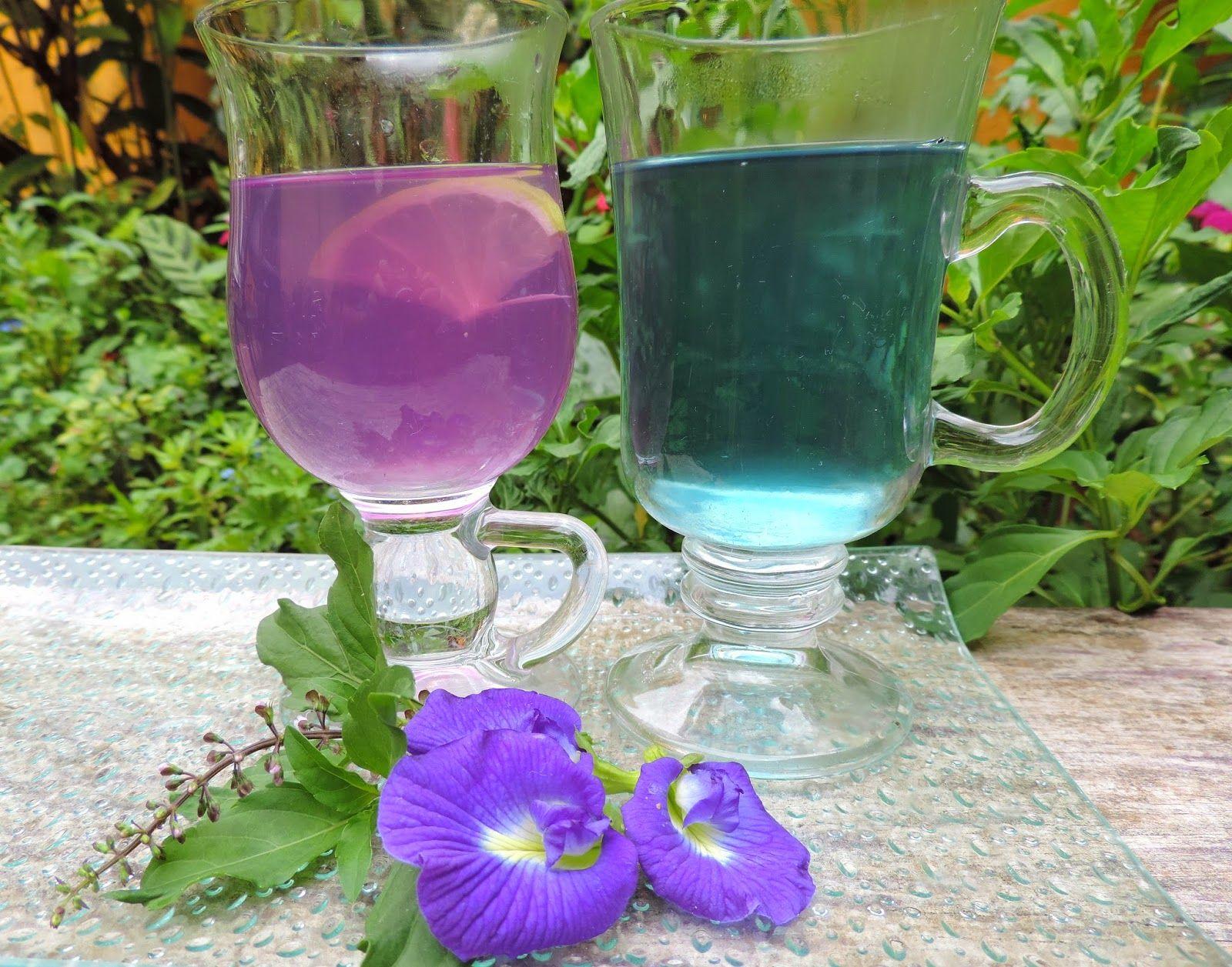 come-se: Chá de flores azuis de feijão-borboleta