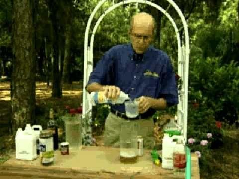 Jerry Baker's Year Round Rose Care Summer Regular Feeding - YouTube