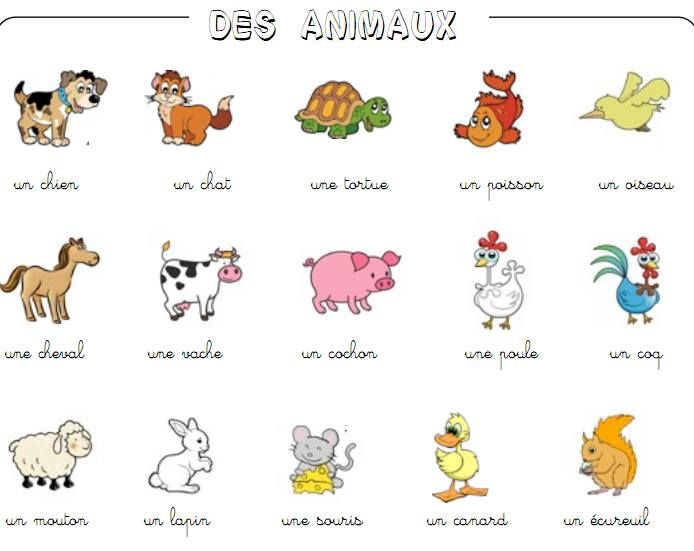 les animaux french vocabulary learn french french lessons teaching french. Black Bedroom Furniture Sets. Home Design Ideas