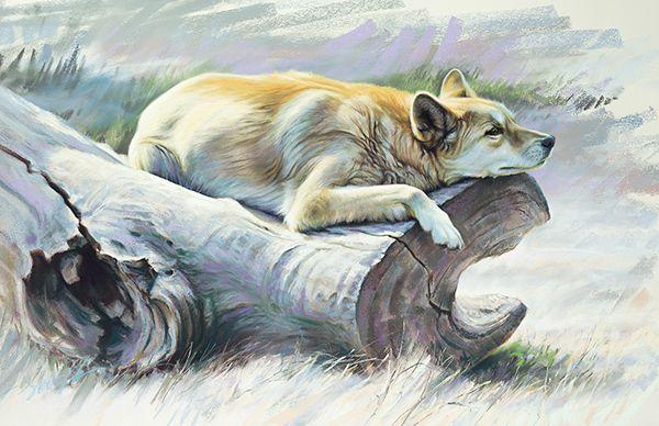 Steve Morvell Australian Nature Wildlife Artist Wall Art