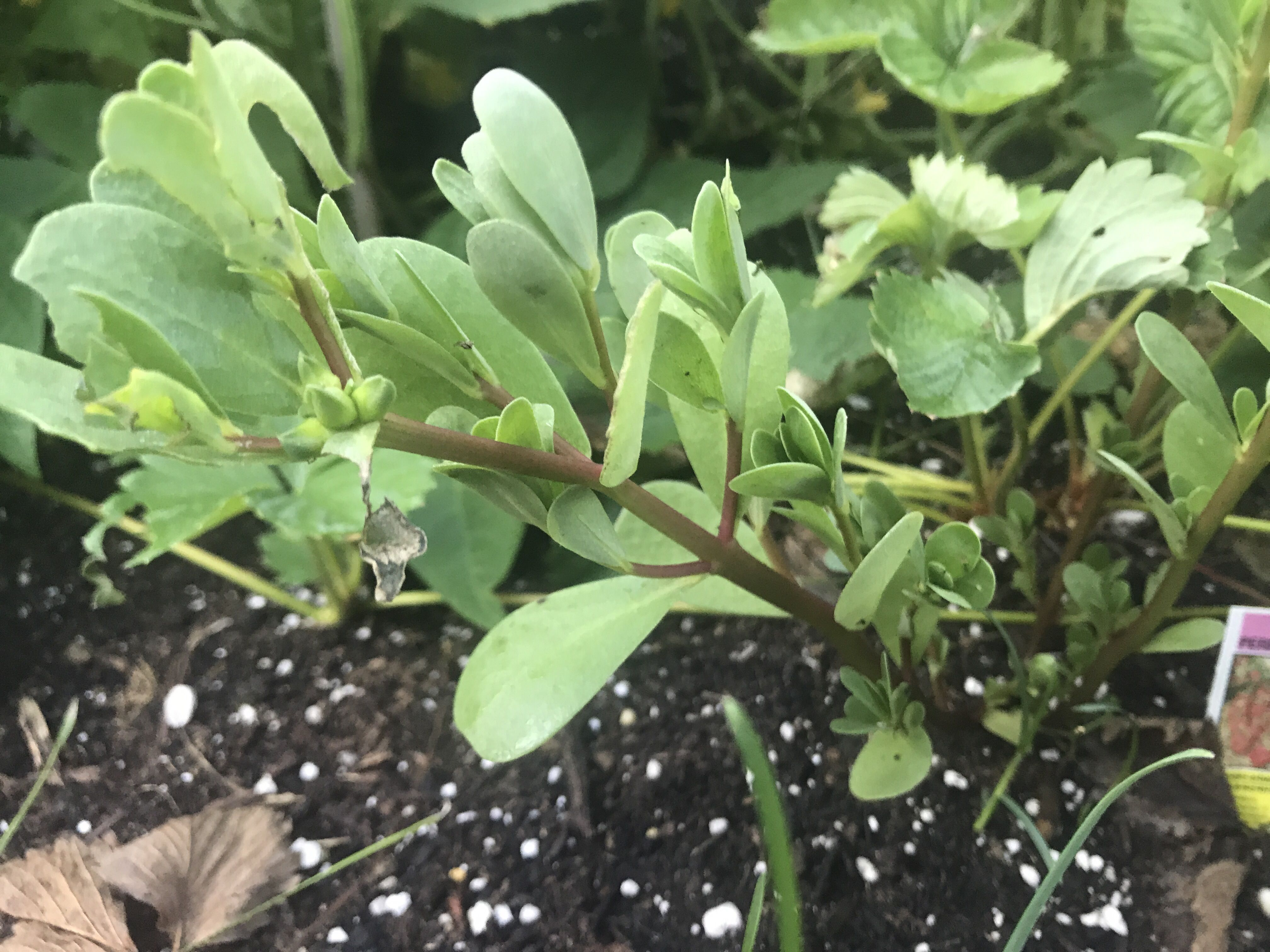 Having Trouble Identifying A Couple Of Plants In My Garden
