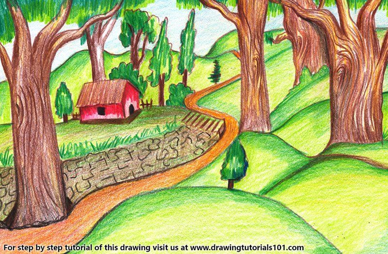 Forest Scene Color Pencil Drawing In 2020 Forest Drawing Forest Painting Pencil Drawings Of Nature