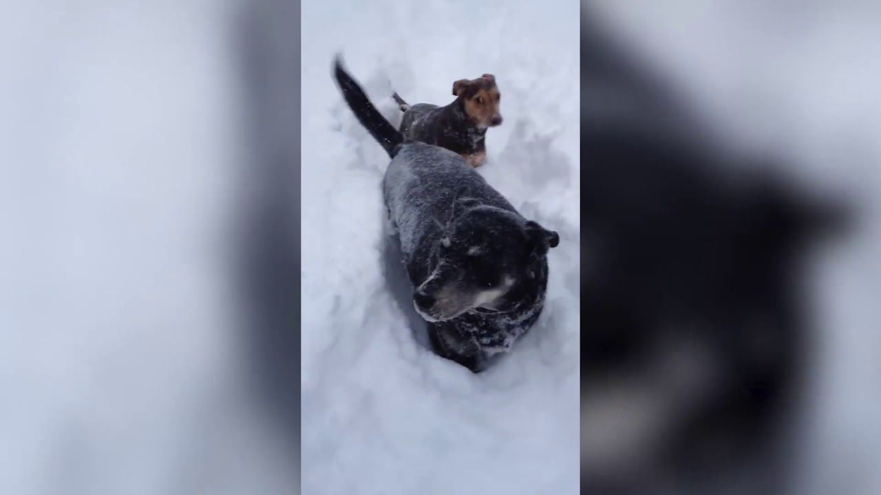 Funny Snow Dog Very Cute Dog Videos Very Cute Dogs Snow Dogs