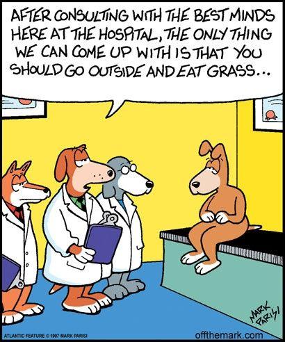 Funny Dog Cartoon Joke Pictures | Dog jokes, Funny dogs, Cartoon dog