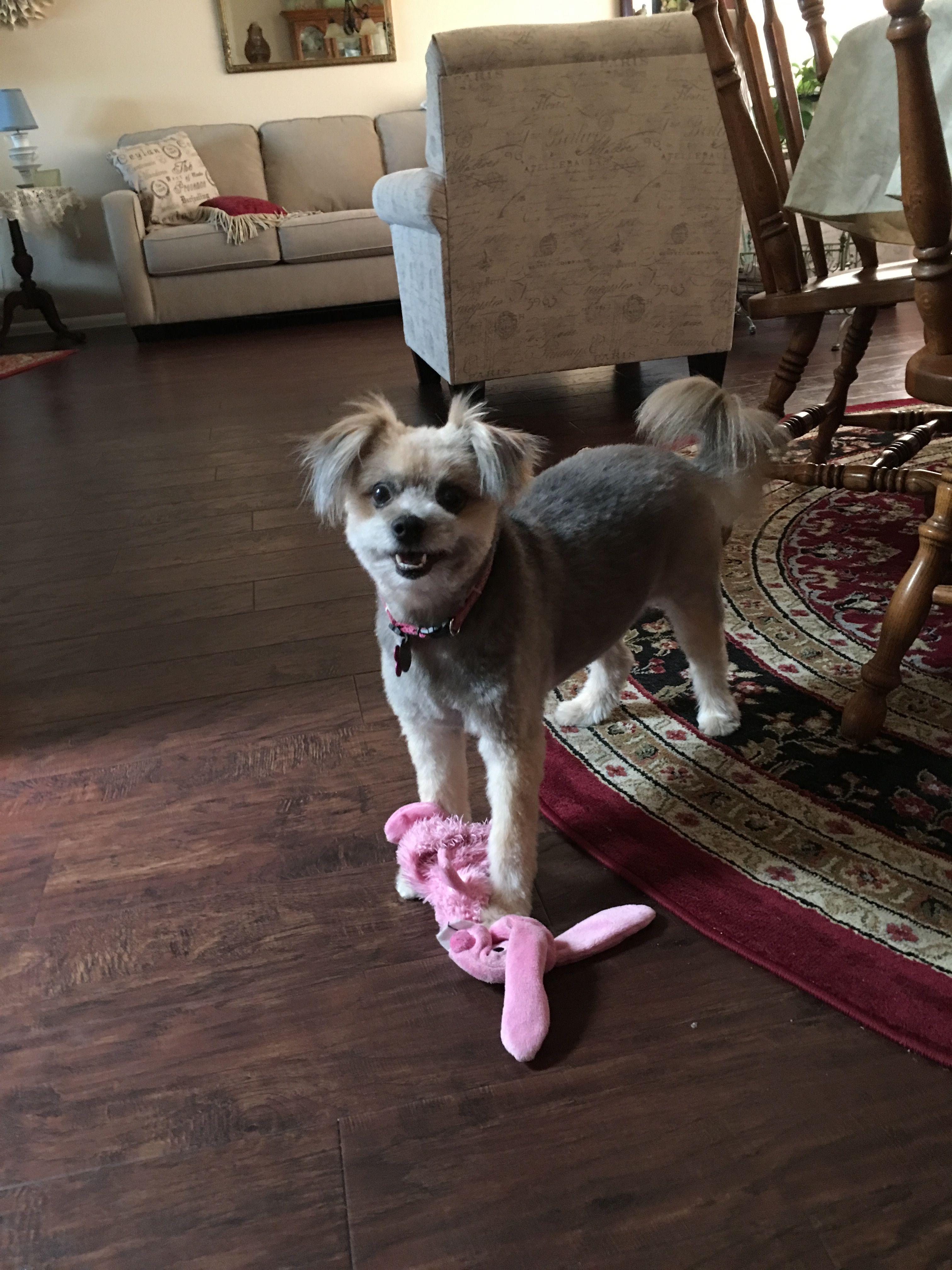 Pin by Carol Bahr on Mia, Ella, & Fluffy Friends Dogs