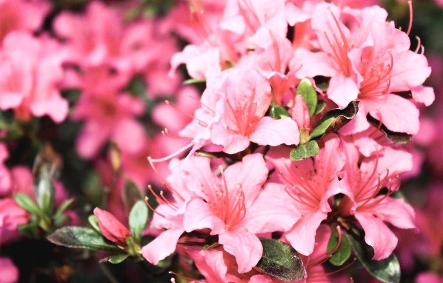 Follow This Information To Get You Garden Growing Plants Butterfly Garden Azaleas