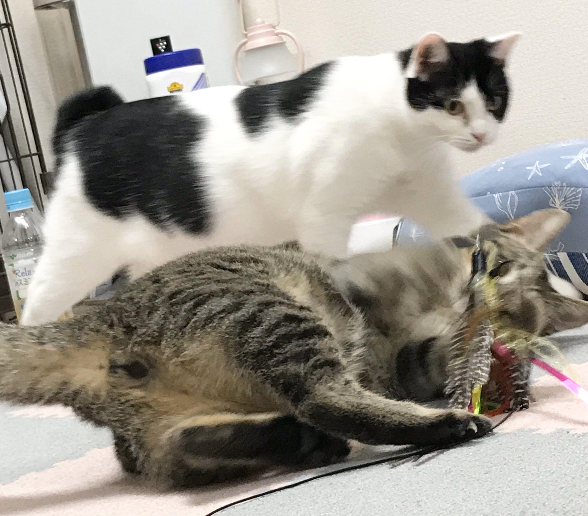 保護猫ルーム Wasao On Twitter Cat Room Cats Animals