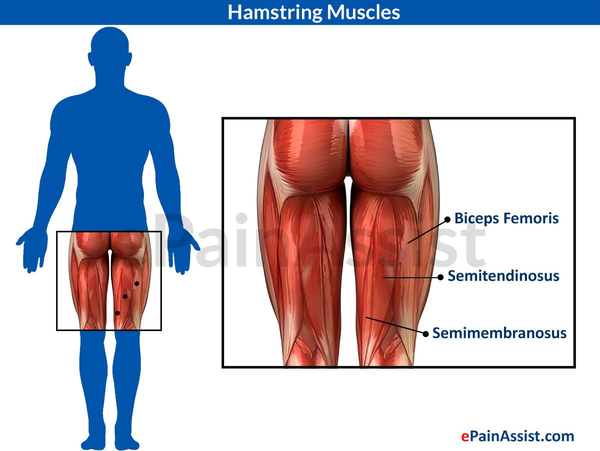Massage Therapy for Pulled Hamstring or Hamstring Strain | Pinterest ...