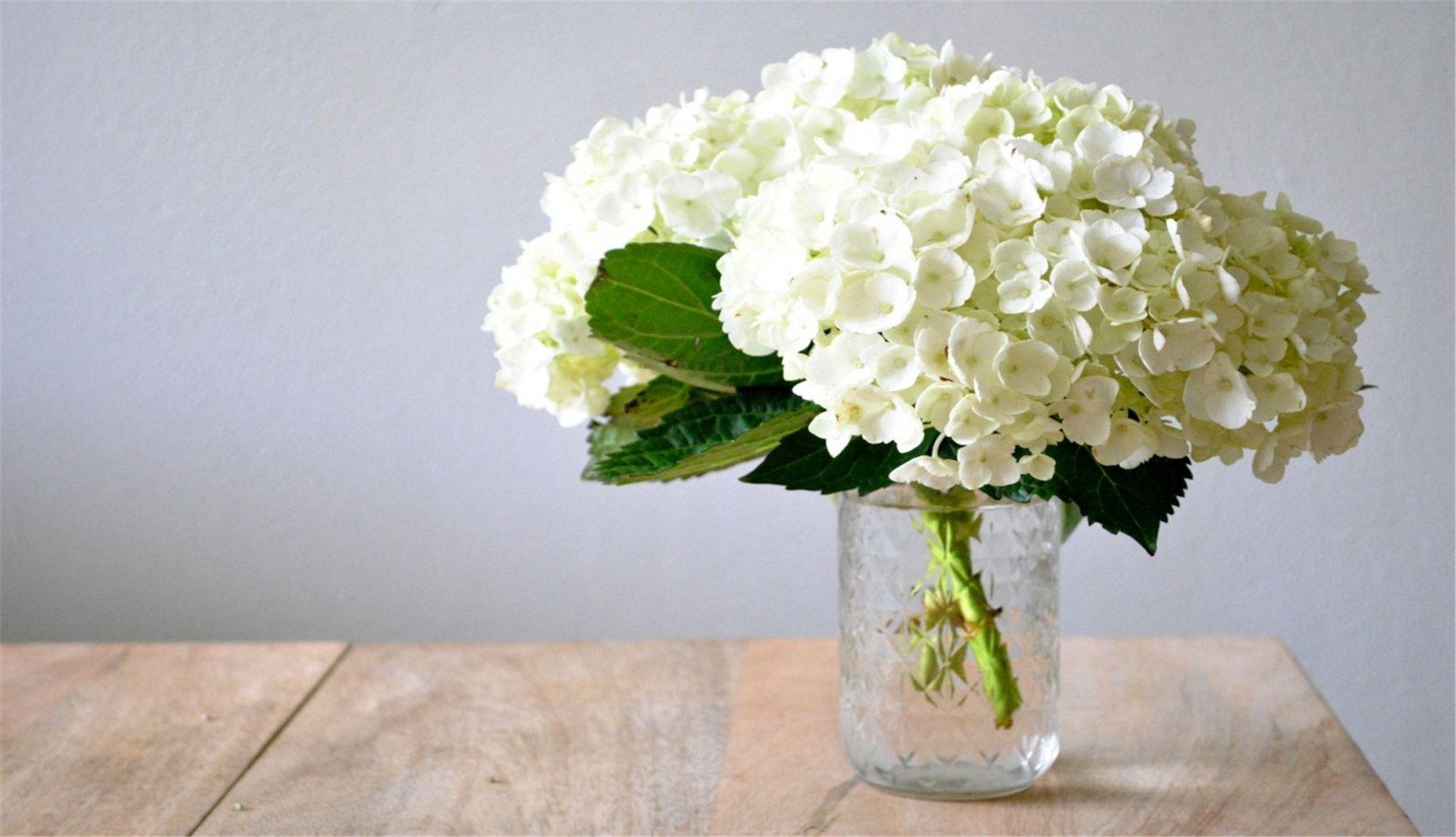 Hydrangea (/haɪˈdreɪndʒⁱə/;[1] common names hydrangea or