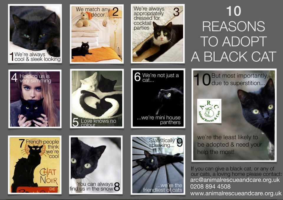 10 reasons to adopt a black cat. They make truly amazing