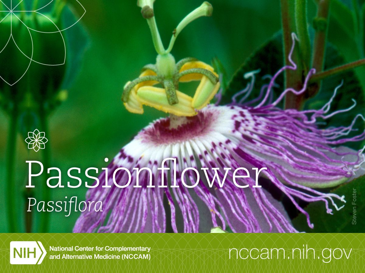Did You Know That Passionflower Is Also Known As Apricot Vine And Water Lemon Read More About This Interesting And Beautifu Passion Flower Herbs Herbalism