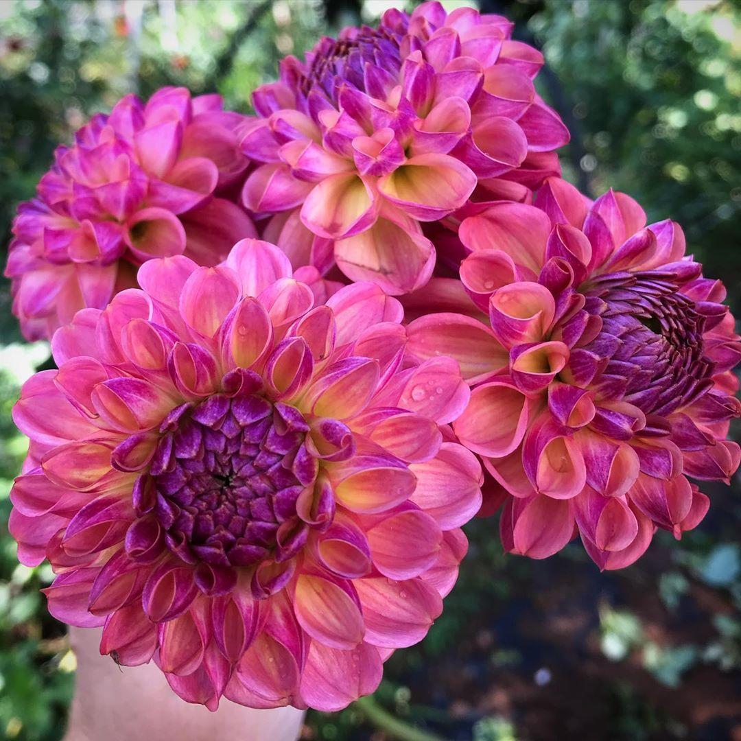 All Things Farm Virginia Allthingsfarm1888 Posted On Instagram Oct 1 2020 At 10 58am Utc In 2020 Flower Farm Farm Flowers