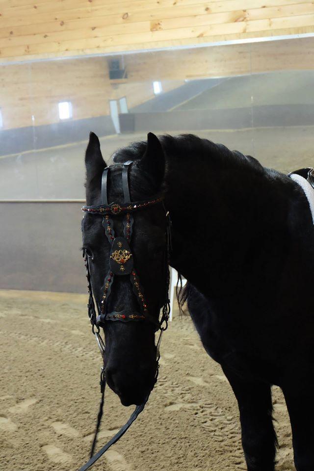 Create the custom piece of your dreams for your horse! equus-couture.com or facebook.com/equuscouture