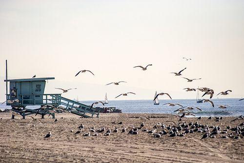 Panic Birds