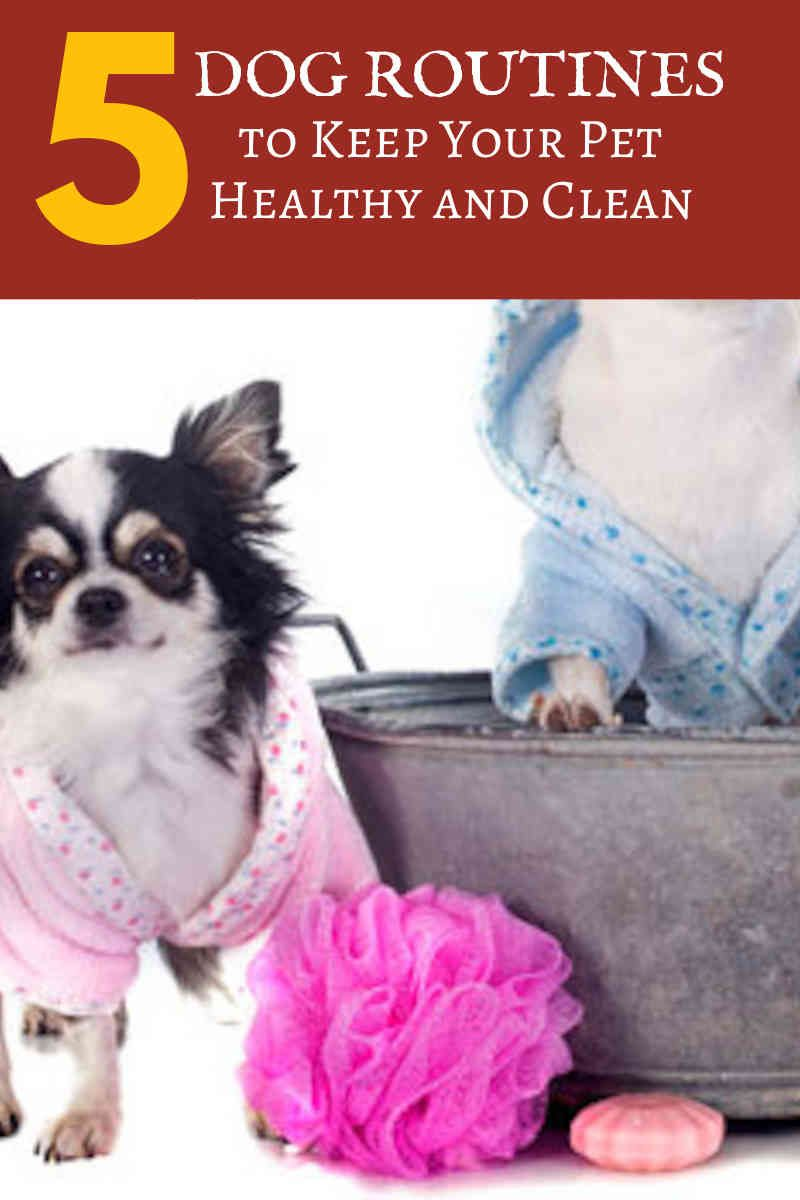 Why You Should Consider Dog Grooming At Home Dog Grooming Tips