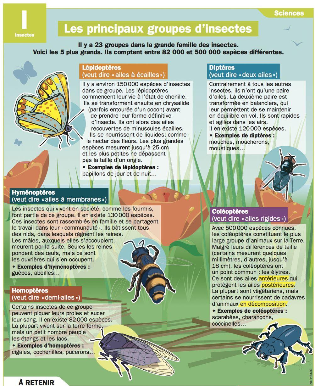 Les principaux groupes d'insectes