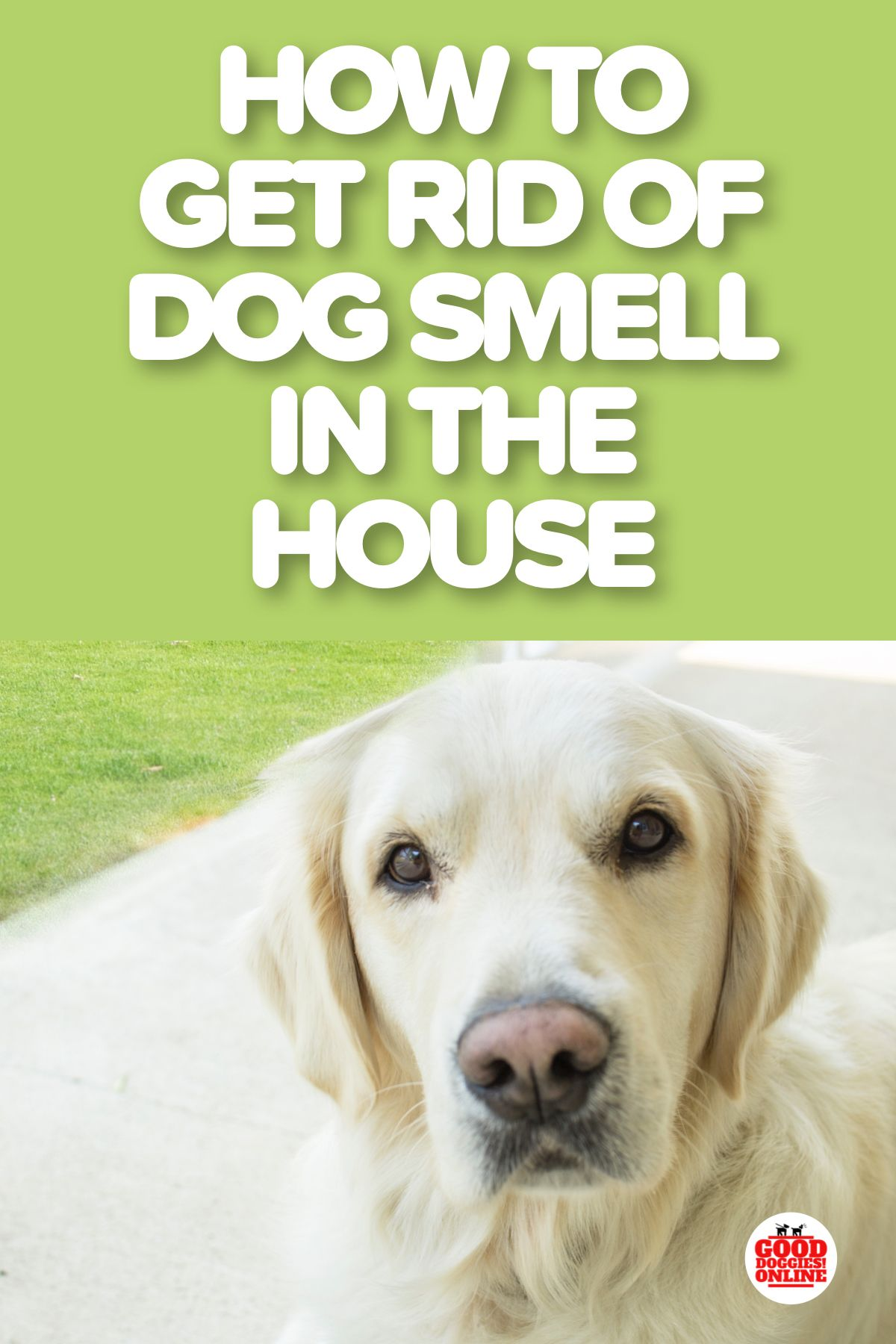 How To Get Rid Of Dog Smell In The House Dog Smells Smelly Dog