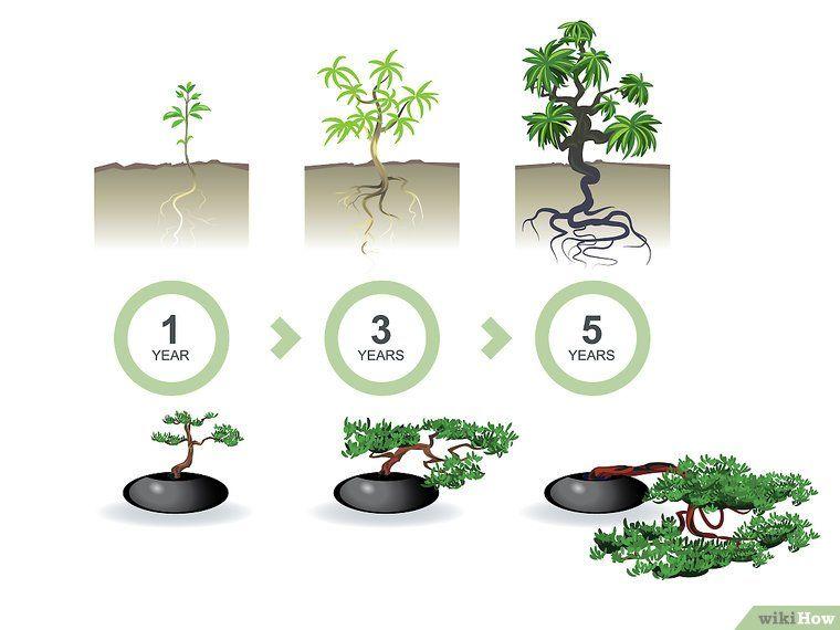 aus einem normalen baum ein bonsai machen bonsai pflanzen pflanzen und topfgarten. Black Bedroom Furniture Sets. Home Design Ideas
