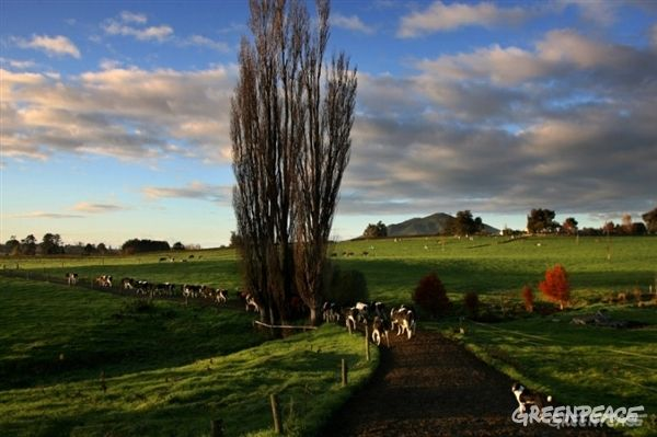 Industrial dairying is failing. It's failing people who want to swim in clean…