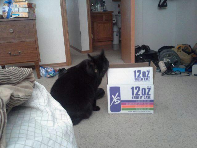 My cat loves the box